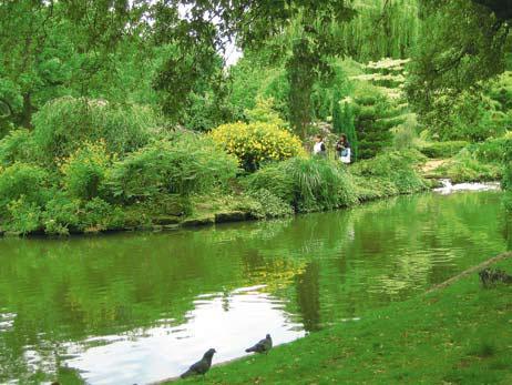 Пруд в королевском парке Лондона