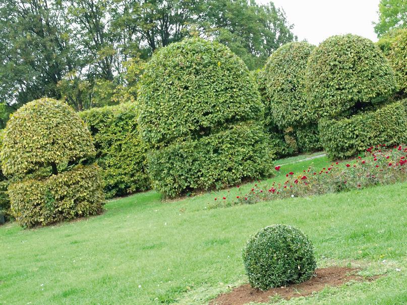 Ботанический сад. Фото: (Анна Гончаренко)