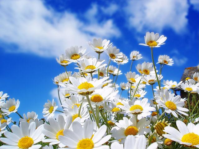 Цвет и свет