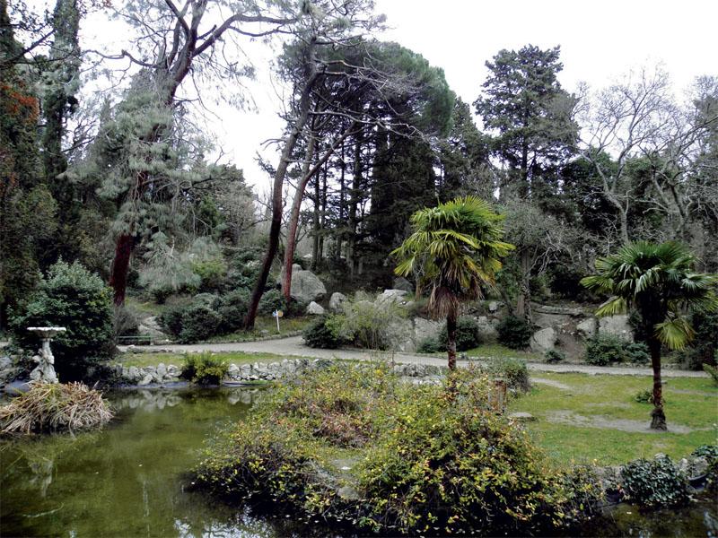 Трахикарпус форчуна у среднего озера