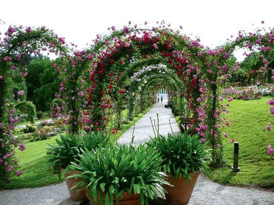 Перголы в розарии