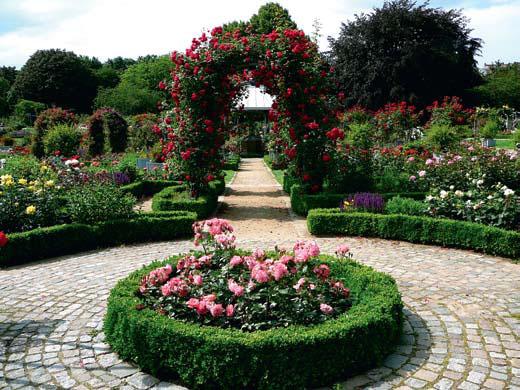 Пергола в розарии ботанического сада в Гамбурге