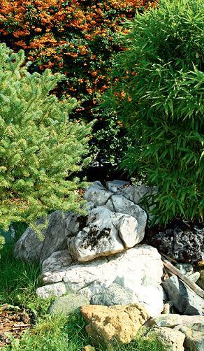 Оформляем участок при помощи хвойных растений
