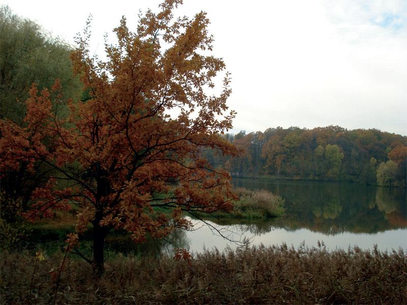 Парк разбит на правом берегу реки Мерчик