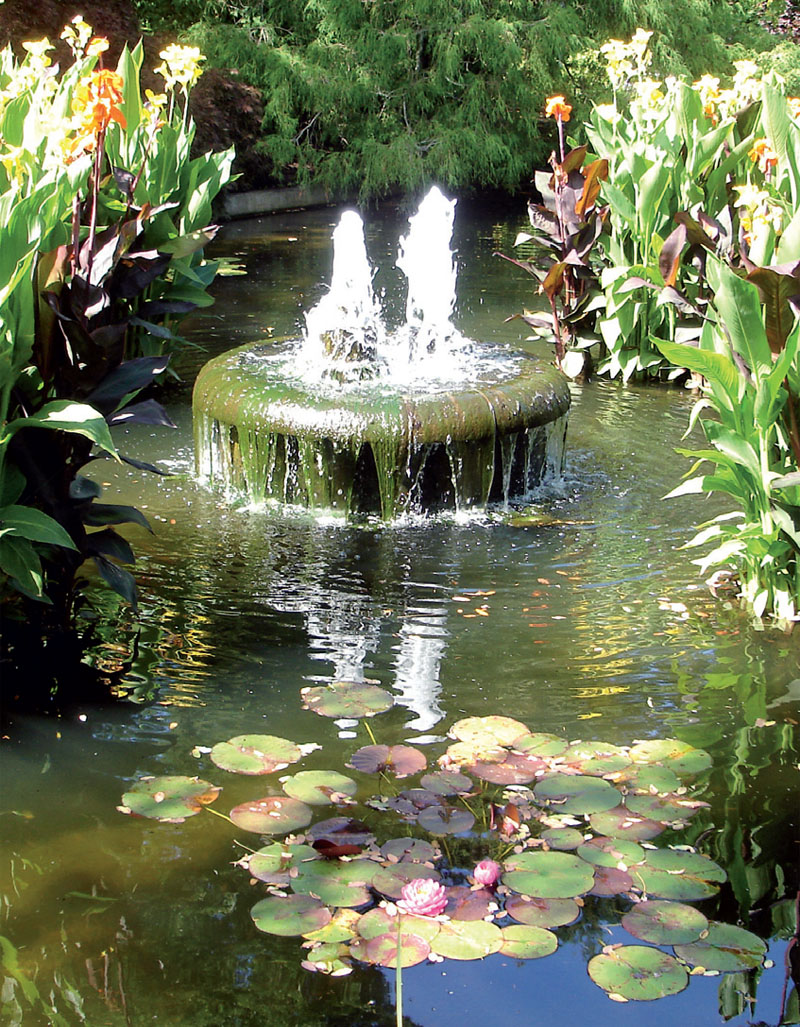 Затонувший сад (Фото: Татьяна Каминская)