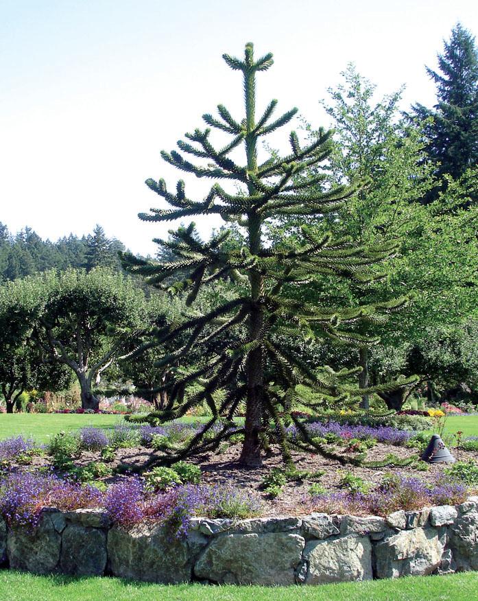 Обезьянье дерево (Фото: Татьяна Каминская)