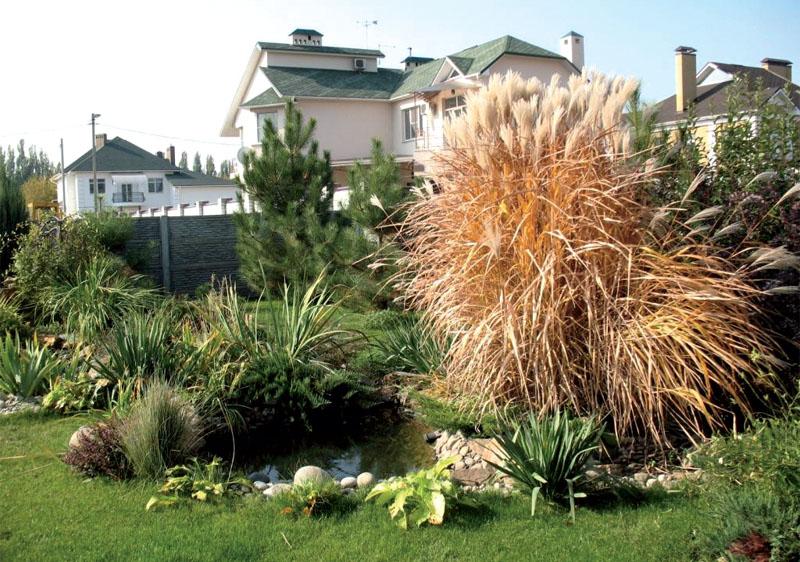 Злаковые растения на клумбе