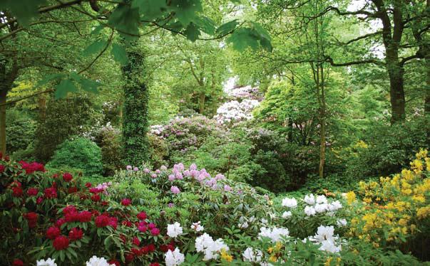 Сад Дороти Клайв