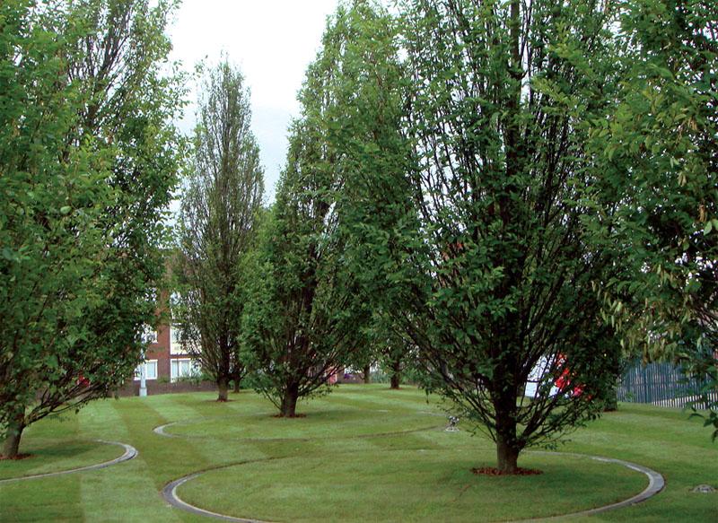 Кинетический сад «Радостные деревья». Бюро Diller Scofidio + Renfro. Ливерпульская биенналле 2008