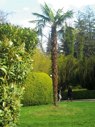 Перед домом красавица пальма