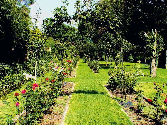 Алейка в саду (Фото: Ирина Кураколова)