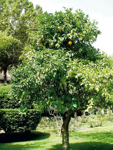 Сад с фруктовыми деревьями (Фото: Ирина Кураколова)