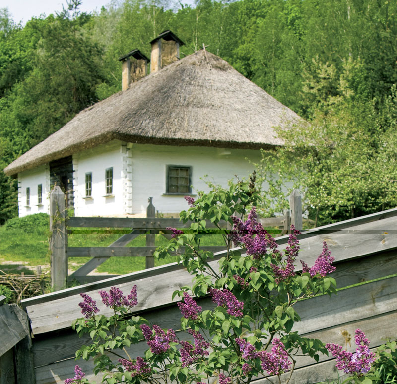 Особенность украинского сада — множество ярких цветов и кустарников у самого дома