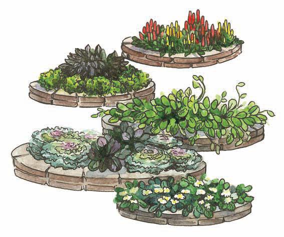 Кухонный огород (Рисунок: Анастасия Саржан)