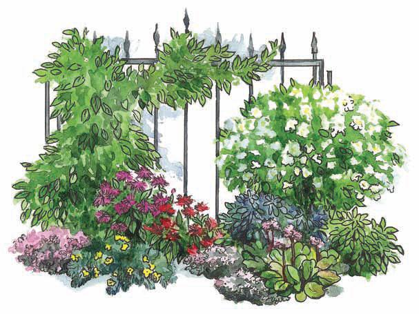 Сад для любителя чая (Рисунок: Анастасия Саржан)