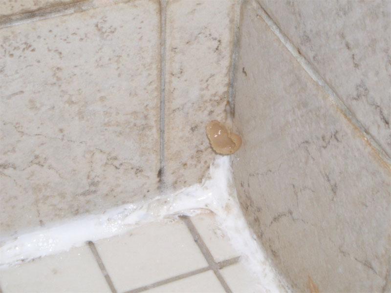 Плесень на стенах в ванной комнате