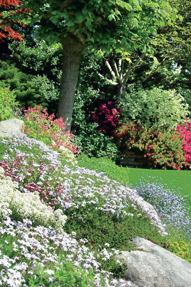 Сочетание цветов и трав на газоне