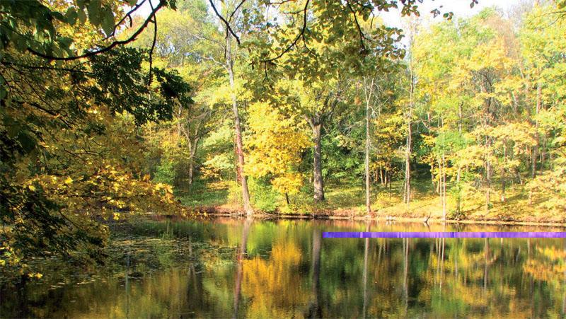 Краснокутский заповедник имеет множество озер (Фото: PANORAMIO, FLICKR)