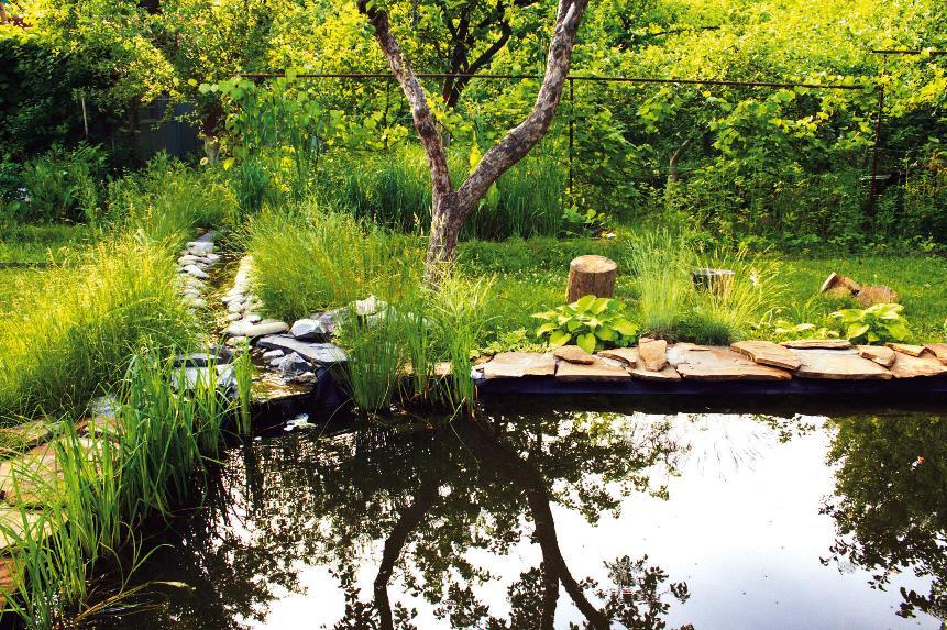 После окончания строительства в прибрежной зоне пруда обязательно посадите растения – они украсят водную гладь (Фото: Д. Шишкин)