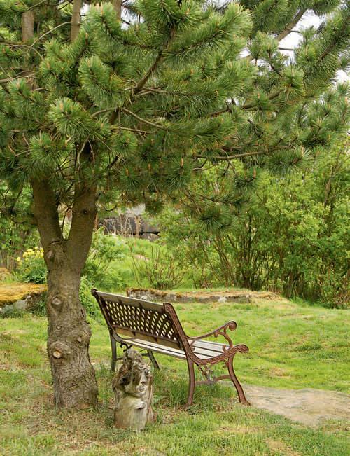 Сад для здоровья