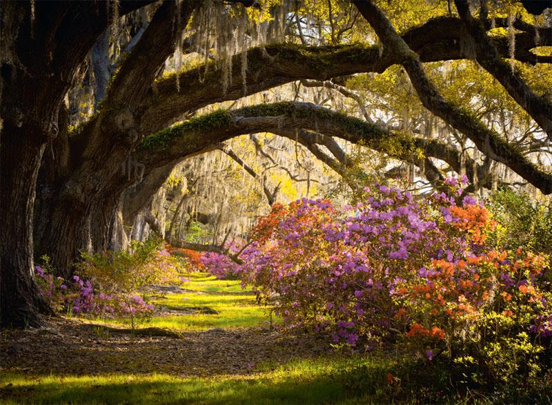 Лес украшенный мхом