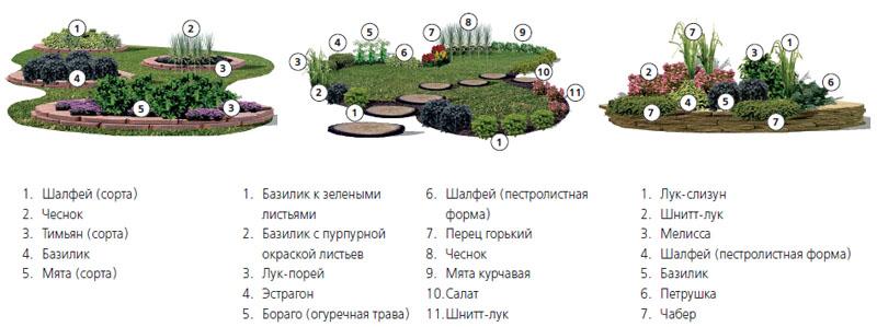 3 варианта оформления сада пряных трав