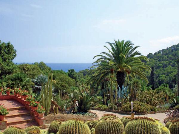 Кактусовый сад Пинья де Роса