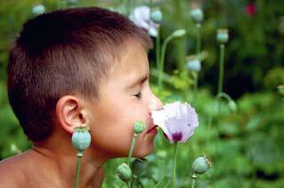 Сенсорика запахов