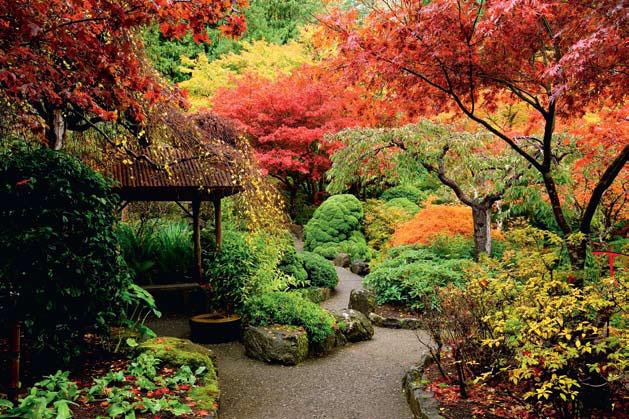 Цветовая феерия сада круглый год