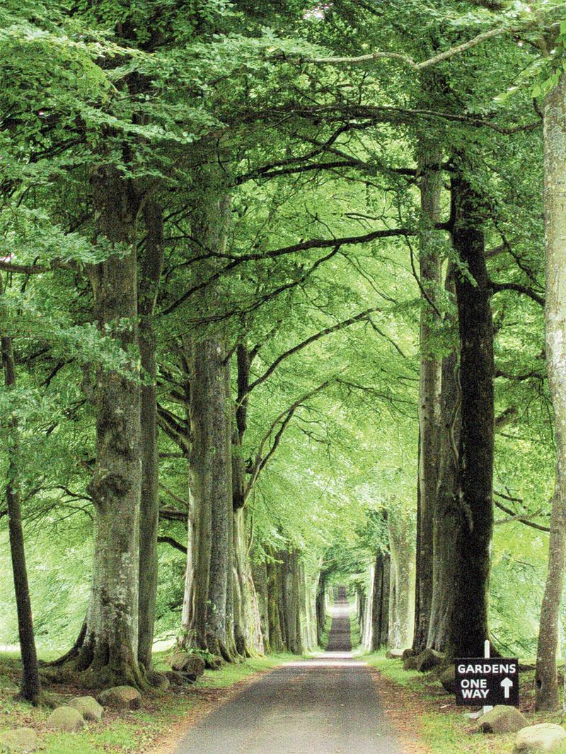 Путь к садам