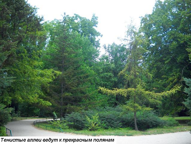 Аскания-Нова. Фото: (Ольга Камоликова)