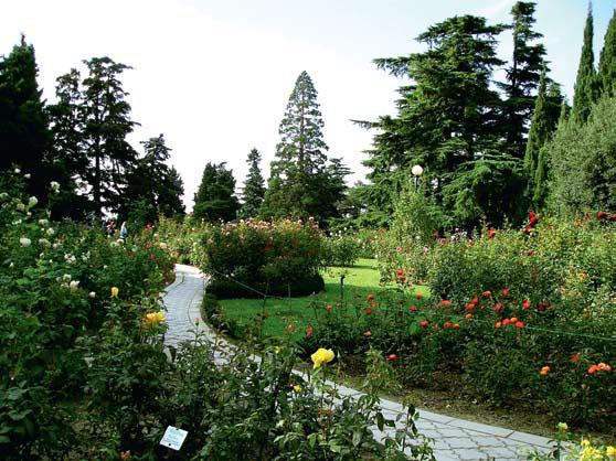 Розарий Никитского ботанического сада (Фото: www.panoramio.com)