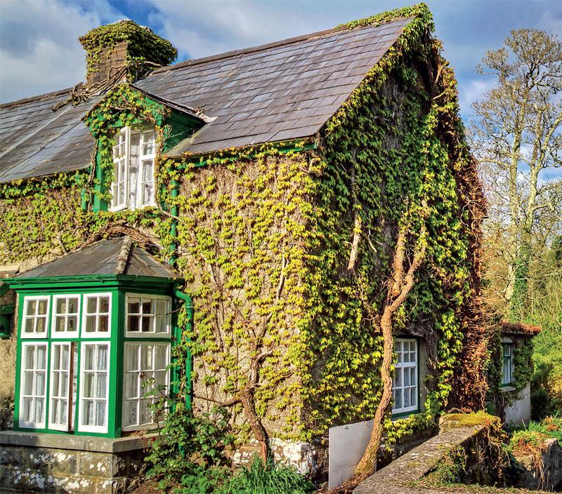 Озеленение стен дома
