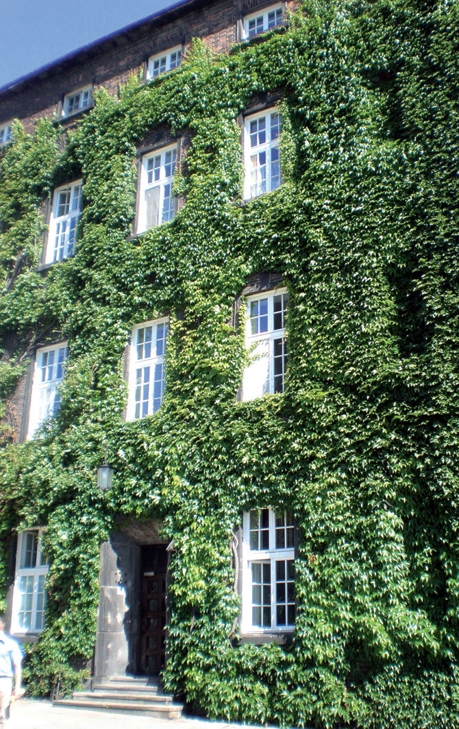 Фасад поросший хмелем