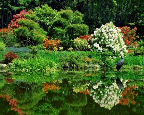 Вода связывает все элементы сада в единую композицию и подчиняет их общей концепции
