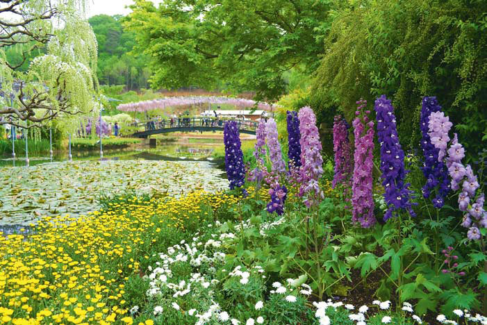 Цветы в японском саду