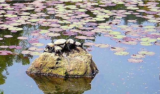 Камень— философский спутник воды и черепаха— символ долголетия (Фото: А. Прокопов, А. Прима)
