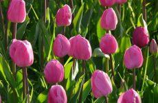 Заказ цветов с доставкой оптом из-за границы