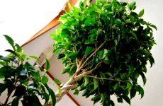 Искусственные растения и деревья