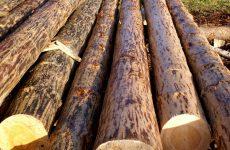Лес для сруба: мифы, породы древесины, полезные советы